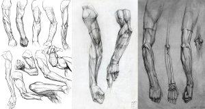 giải phẫu cơ tay
